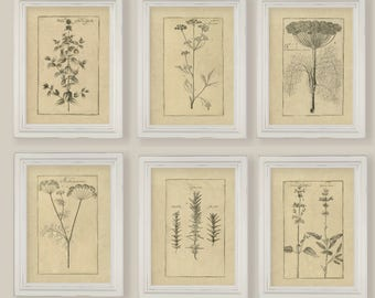 Cooking Herbs Botanical Sepia Vintage Reproduction Illustrations Sketches Drawings Set of 6 or 12