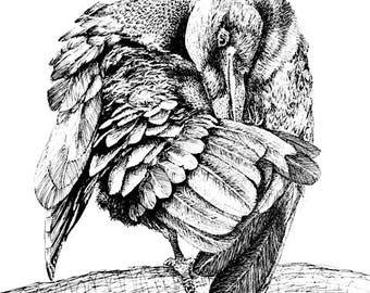 Preening Raven