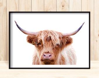 Animal Prints, Large Highland Cow Print, Printable Cow Poster, Modern Cow Wall Art, Farm Animal Decor, Animal Wall Print, Highland Cow Decor