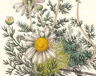Chamomile + Lavender Tincture - Organic - For relaxation, breathing - An antidote for nerves, depression