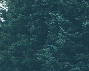 Forest Top Digital Download