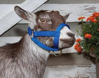 Goat Halters - Size L - Could work also for sheep, alpacas, (Small/young llamas?)