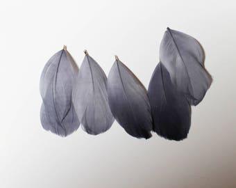 Plume violet clair