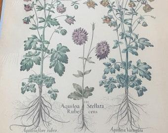 Vintage Botanical Hand Colored Print
