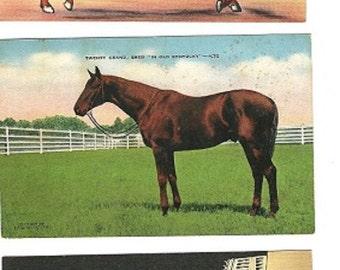 kentucky derby linen postcards race horses kentucky gentleman downloads