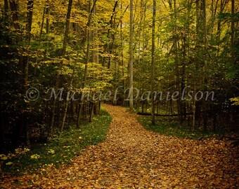 Autumn Photographic Fine Art Print Follow the Orange Leaf Road