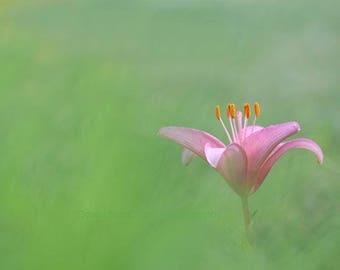"Zen Photo, Zen Decor, Mindfulness, Meditation Art, Simplicity, Minimalist, Serenity, Instant Download, Inspirational Quote, Lily, ""Solitude"""