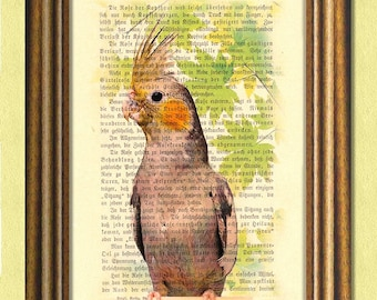 ROBB the COCKATIEL - Parrot -  Parakeet - Dictionary art print -Vintage book page print recycled - Art Print Dictionary