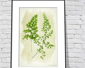 Botanical Print - Fern Art Print - Nature Print - Green Wall Art Print - Woodland Art - Maidenhair Fern Art Print - Monochromatic Print