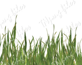 PNG GRASS, Cutting Photoshop file Download, discount coupons, jpg, svg, pdf,  flora