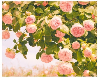 Roses photography Oversized floral art, Pink flowers wall art Romantic pastel Roses print Extra large wall art living room decor 11x14 24x30