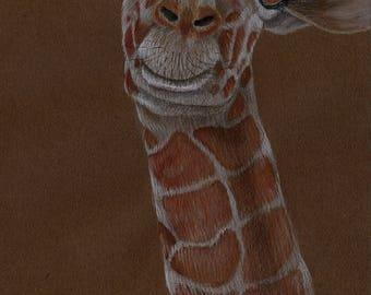 Reticulated Giraffe Original Drawing