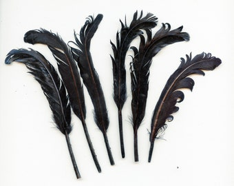 Lot of (6) Vintage BLACK Curled Millinery Feathers 5382
