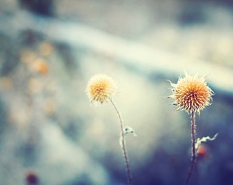 Botanical Photography Fine Art Print, Dried Flowers, Yellow & Blue Shades Country Home Decor Print- Winter Moments Print