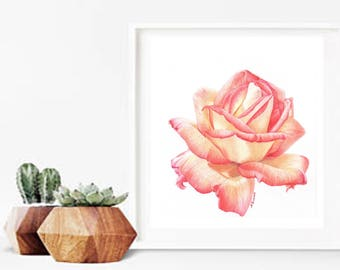 Rose Study Print