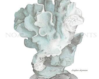 Blue Coral Print. Sea Foam Coral Print. Pale Blue Coral Sea Life Wall Decor. Blue Bathroom Picture. Blue Bedroom Picture. Sea life Art Print