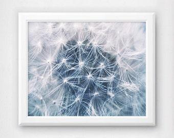 Dandelion Print, Plant Prints, Photography, Wall Decor, Gallery Print Idea, Photo Printables, Art Photograph, Office Wall Art, Nature Photo