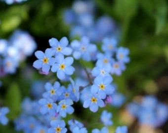 Beautiful Blue Photograph