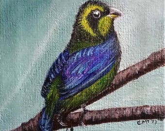 Gold-ringed Tanager Acrylic Mini Painting -Conservation Art