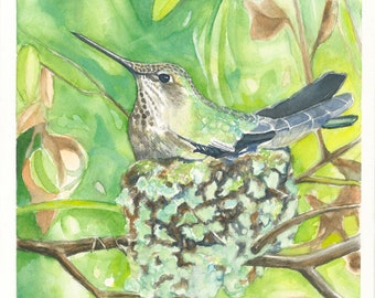 Nesting Anna's Hummingbird Original Watercolor