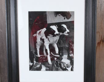 Rare Unusual Framed Black and White Print Two Headed Cow Calf Circus Sideshow Shoe Display Window Photography
