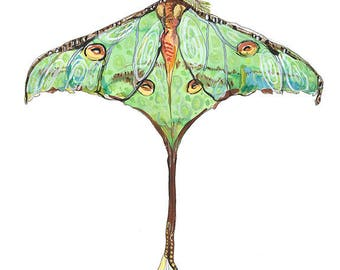 Luna Moth Butterfly Open Edition // home decor// Art Print// butterfly art // contemporary design  5x7, 8x10, 11x14, or 13x19