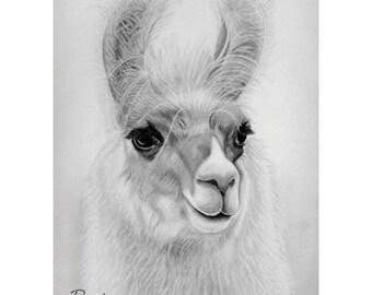 Llama 5x7 Print from Pencil Drawing
