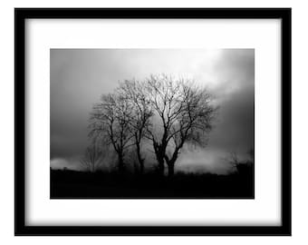 Tree Picture, Black And White Photography, Moody, Ireland Photography, Ireland Art, Gift For Her, Gift For Him, Ireland, Photography Prints