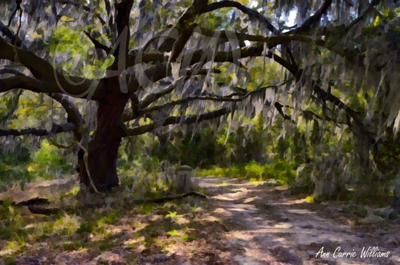 An ancient moss draped oak tree on  Edisto Island, South Carolina (canvas)