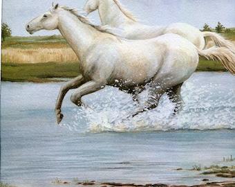 "Camargue Pony.""Buy one, choose another free""  horse, pony, wildlife, animal prints, bird prints, wildlife prints, animals, birds"