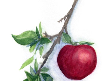 Apple Watercolor Print 5 x 7, apple art, home decor, wall art, teacher gift, autumn decor, nature painting