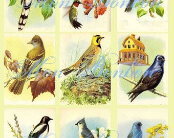 Vintage Birds Collage Sheet Atc sized 2.5 x 3.5 No. 1101 - DIY Printable - INSTANT DOWNLOAD