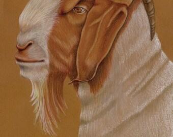 Boer Goat Original Drawing