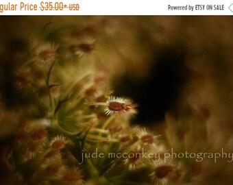 20 Percent Off Sale queen annes lace photograph, nature print, home decor, Fine Art Photograph