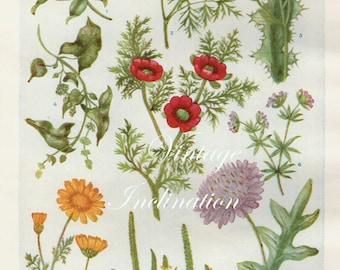 Vintage Antique 1930s Flowers botanical bookplate original lithograph art print illustration 4664