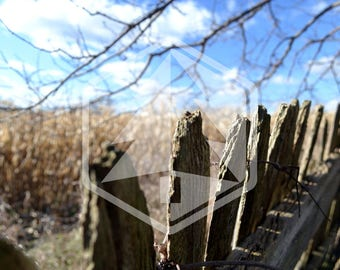 Weathered Fence with Corn and Blue Sky in Background Digital Download Photo