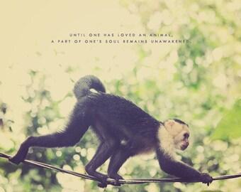 White Faced Capuchin, Capuchin Monkey, Black Monkey, Home Art Decor, Monkey Photography, Monkey Art, Monkey Photo, Monkey Print, Monkey Gift
