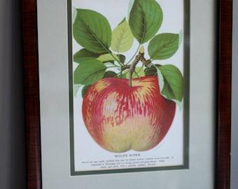 Framed Vintage Litho Apple Print: Wolfe River Apple