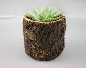 Medium Wooden Planter with Succulent