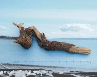 raw driftwood natural sea serpent sculpture wood art supply