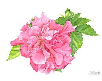 Hibiscus watercolour painting print, A4 size. H10616. Hibiscus painting. Hibiscus print. Botanical wall art. Botanical print.