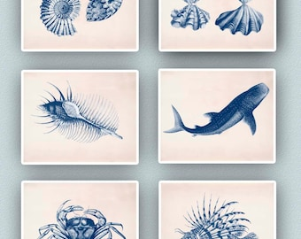 Ammonite, clam, Whale-shark , Crab, Sea lion, Sea creatures Prints, Nautical art, Ocean Nautical Prints, coastal living, Set 6 navy prints