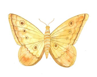 Vintage moth watercolor illustration