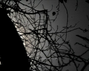 monochrome tree print, Dreamscape no9. Abstract Moon, silver moonlight, grey Night Sky, Black & white moonscape, tree branches photo