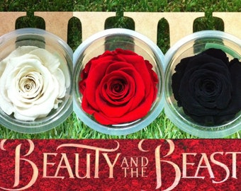 21 Forever Eternal Live Rose Color Choices for Your Beauty and The Beast Rose Pots