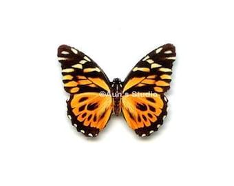 12 Small Paper Butterflies, Realistic 1 inch Paper Butterflies - Orange Tiger Butterfly