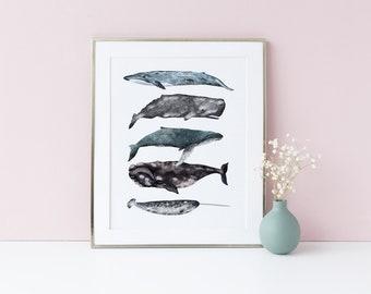 Baleines illustré affiche, différents Types de baleines, Art nautique, impression de bord de mer, affiche illustrée, Sealife impression, baleines empilés, Art