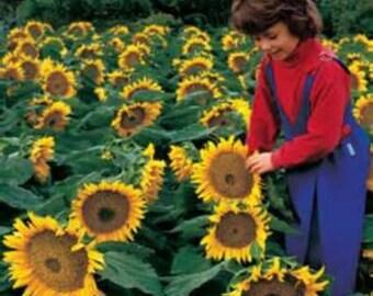 Organic Sunflower Seeds *Dwarf Sunspot*~Mycorrhizae Inoculated/Bulk Available~
