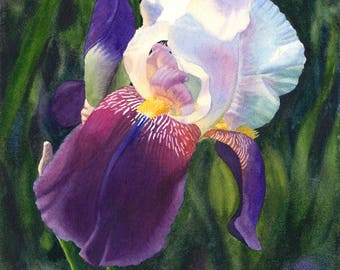 White Purple Iris Art Watercolor Painting Print by Cathy Hillegas, 8x10, watercolor iris, watercolor floral art print, flower, Gift for mom