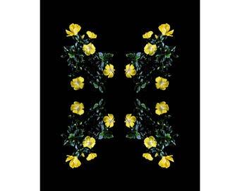 Limited Edition Fine Art Print-Flowers-Floral-Florography-Modern Art-Pink-Black-Flower-Abstract-Nature-Minimalist-Minimal-Interior Design